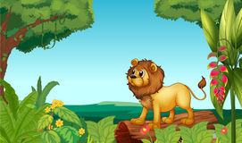 A scary lion in the jungle Stock Images