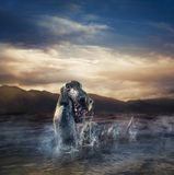 Scary Loch Ness Monster emerging from water. Photo composite of Loch Ness Monster Stock Images