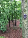 Scary mask on tree. Stock Image