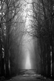 Scary misty forest in black and white for halloween Stock Images