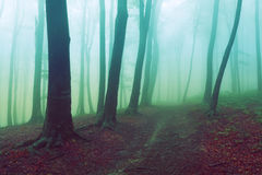 Scary misty road in the forest Stock Photography