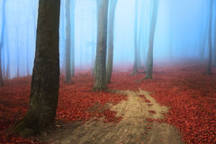 Scary misty road in the forest Royalty Free Stock Photography
