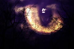 Scary monster's eye. Watching forest at night Royalty Free Stock Photos