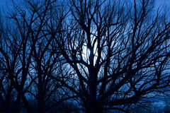 Scary Moonlit Night. A nighttime landscape photo of a full moon behind some silhouetted trees giving the photo a ominous, scary feeling stock photo