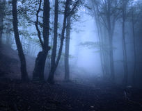 Scary mysterious forest in fog in autumn. Magic trees. Nature Royalty Free Stock Photo