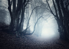 Scary mysterious forest in fog in autumn. Magic trees Stock Photo