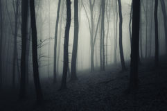 Scary mysterious forest with fog Stock Photography