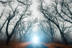 Scary mysterious forest with road in fog in autumn Stock Image