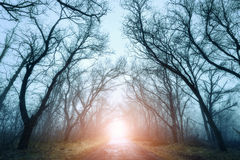 Scary mysterious forest with road in fog in autumn Royalty Free Stock Photos