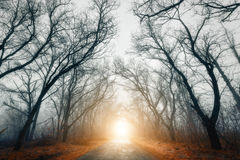 Scary mysterious forest with road in fog in autumn Royalty Free Stock Image