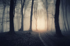 Scary mysterious Halloween forest at sunset Royalty Free Stock Image