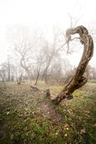 Scary photo of a tree Stock Images