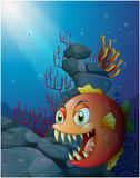 Scary piranha under the sea near the rocks Stock Photo