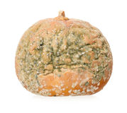 Rotting pumpkin Stock Images
