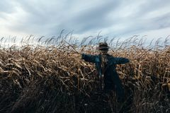 Scary scarecrow in a hat. On a cornfield in cloudy sky background. Halloween holiday concept royalty free stock images