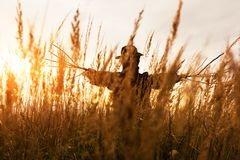 Scary scarecrow in a hat. On a cornfield in orange sunset background. Halloween holiday concept stock images