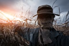 Scary scarecrow in a hat. On a cornfield in orange sunset background. Halloween holiday concept stock photos