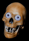 Scary scull. Crazy scary Halloween scull with eyeballs Royalty Free Stock Photography