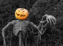 Scary Sight. Spooky jack-o-lantern scarecrow Stock Images