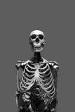 Scary Skeleton Stock Photo
