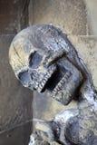 Scary skeleton - skull. Royalty Free Stock Image