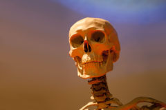 Scary Skeleton Skull Royalty Free Stock Photos