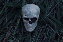 Scary skeleton skull sitting in hay and straw on a cold fall evening. Representative of death, creepiness, horror royalty free stock images