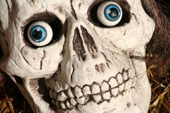 Scary skull Royalty Free Stock Image
