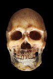Scary skull. Fake skull in below lighting on black background royalty free stock photos