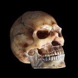 Scary skull. Fake skull in below lighting on black background stock images