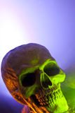 Scary Skull in Green Light Stock Image