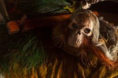 Scary skull head Stock Image