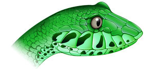 A scary snake. Illustration of a scary snake on a white background Royalty Free Stock Photo