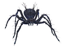 Scary Spider. Stock Photo