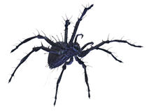 Scary Spider. Big scary spider  on white wth clipping path. CG illustration Royalty Free Stock Photo