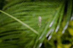 Scary spider and its web. Waiting for prey Stock Photo
