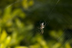 Scary spider and its web. Waiting for prey Royalty Free Stock Images