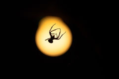 Scary spider at night in front of light bulb Royalty Free Stock Images