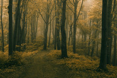 Scary trail in foggy forest. Dark scary forest like a fairy tale Stock Images