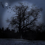 Scary tree. Dark, scary tree with birds and moon Royalty Free Stock Images