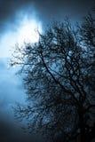 Scary Tree Royalty Free Stock Photo