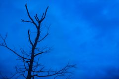 Scary Tree Stock Photography