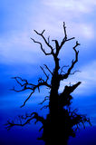 Scary tree on the blue sky. Scary tree on the deep blue sky background - blurred branches to increase the spooky effect Stock Photography