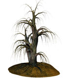 Scary tree. 3D illustration of a scary tree  on white background with patch of ground Royalty Free Stock Photography