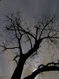 Scary tree at night Royalty Free Stock Image