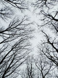 Scary tree tops in winter forest Stock Photos