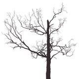 Scary tree Stock Photos