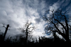Scary Trees. Winter leafless oak tree branches against dramatic cloudy sky backdrop Royalty Free Stock Image