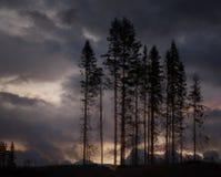 Scary trees Royalty Free Stock Photo