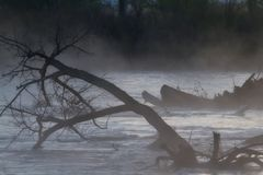 Scary Trees on a Foggy River. Halloween scene of a foggy river and dead trees. Horsethief Canyon State Wildlife Area in western Colorado has scenic views royalty free stock photography
